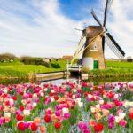 Цена на перевод на голландский язык